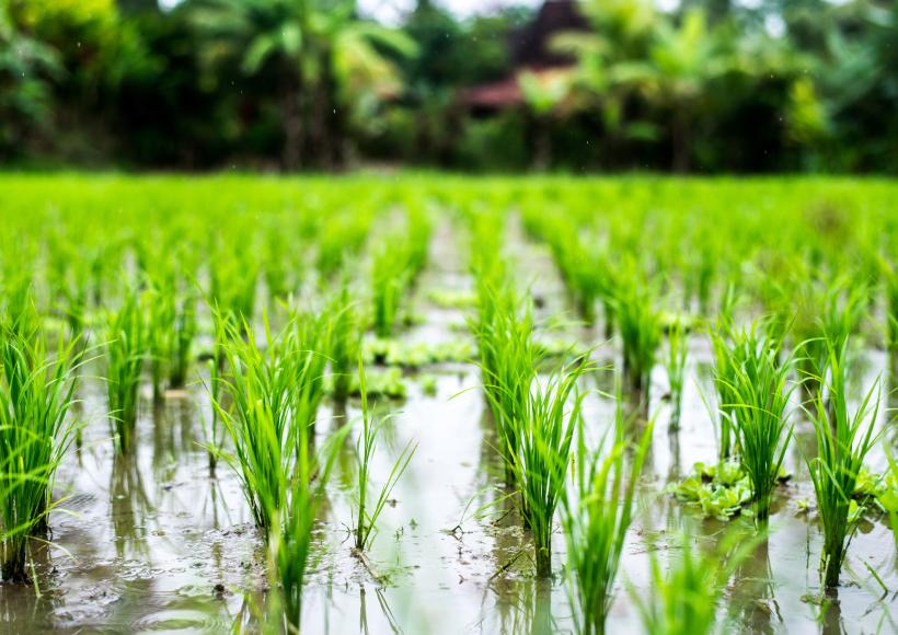 Soil Activator – Farm Gate Reports
